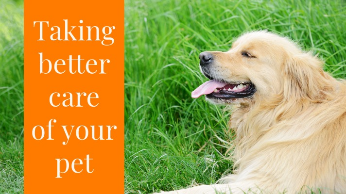 healthy pet tips